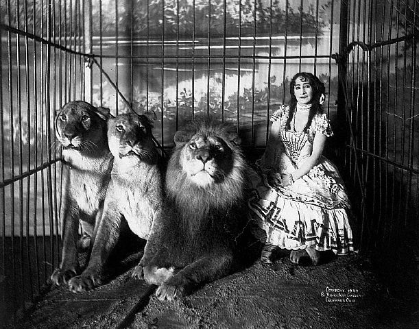 1899 --- Adjie seated in a cage with a lion and two lionesses, 1899. --- Image by © CORBIS