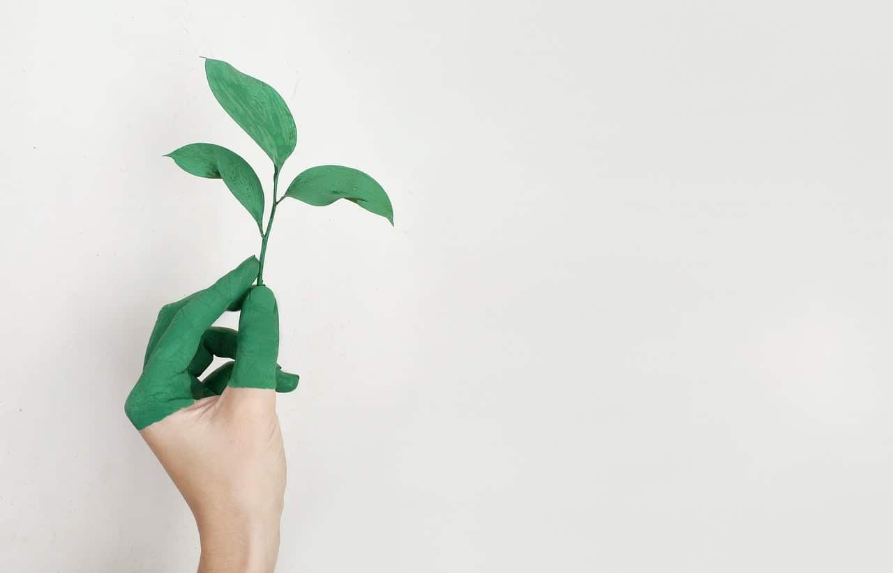 A woman's hand holding a tree sprout