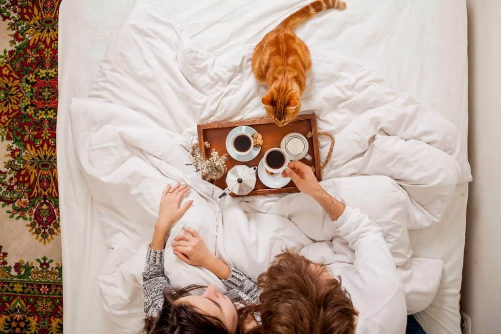 breakfast in bed with cat